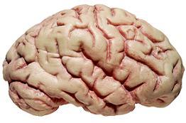 דלקת קרום המוח