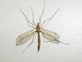 כך תוכלו להימנע מעקיצות יתושים